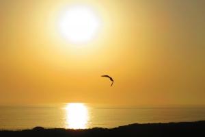 sunset-bird-1426646-m